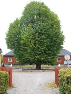 Vårdträdet.jpg